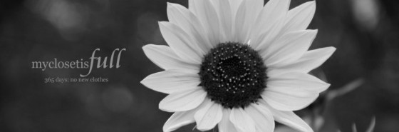cropped-sunflower-2-e1347318486812-copy.jpg